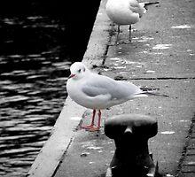 Seagull by JP Maloney