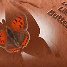 Butterfly by Robert Abraham