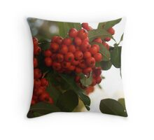 Raindrops on Pyracantha Throw Pillow
