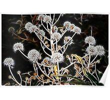 Fractal Plant Poster