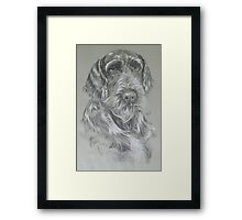 German Wire-haired Pointer Framed Print