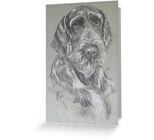 German Wire-haired Pointer Greeting Card