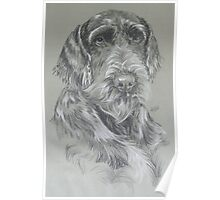 German Wire-haired Pointer Poster