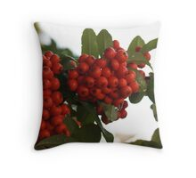 Droplets on Pyracantha Berries Throw Pillow