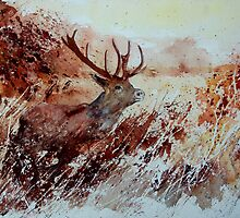 A stag by calimero
