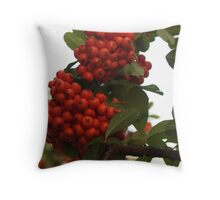 Pyracantha Stem with Droplets Throw Pillow