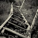 Overgrown stairs by Dave Hare