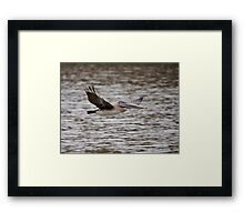 Brown Pelican Review Pass Framed Print