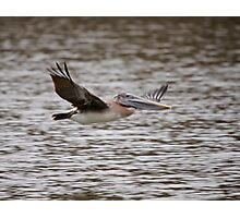 Brown Pelican Review Pass Photographic Print