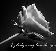 Pledge by Kimberley  x ♥ Davitt