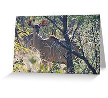 Kudu (Tragelaphus strepsiceros), Khama Rhino Sanctuary Botswana Greeting Card
