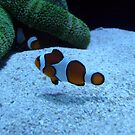 Nemo's world by stormygt