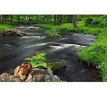 1040-Jungle Stream Surprise Photographic Print