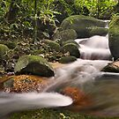 Forest Stream by Steven  Siow