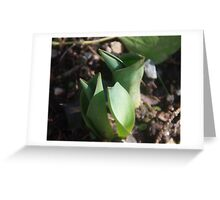 Brave New Tulips Greeting Card