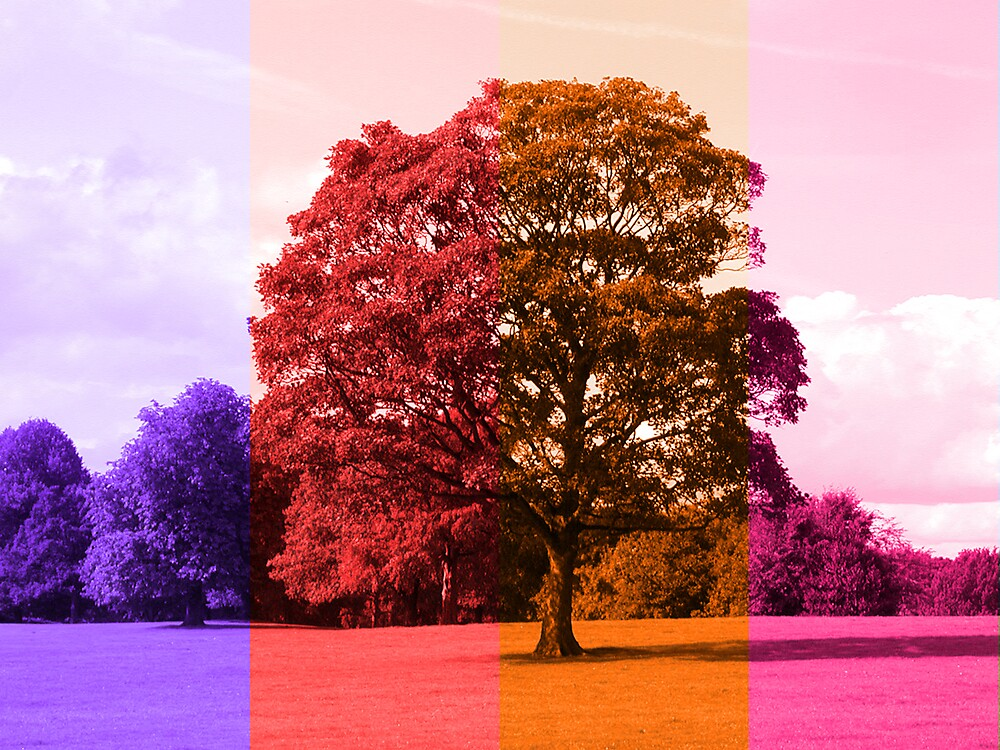 Lovers Tree by Nathan Walker