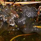Perpetuating the species - frog spawn by Rivendell7