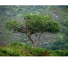 Irish Tree Photographic Print