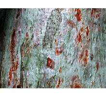 """Brush-strokes on Bark"" Photographic Print"