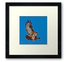 Red Tailed Hawk - Dark Morph Framed Print