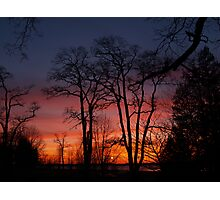 Trees at Sunset Photographic Print