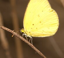 Butterfly resting at night by Narelle Power