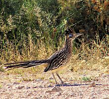 West Texas Roadrunner by R&PChristianDesign &Photography