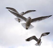 Hooked On Birds by Lynda   McDonald