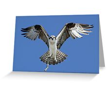 Moms turn to build nest! Greeting Card
