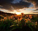 Rowena Crest Sunset by Dan Mihai