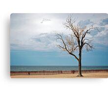 Beech On Beach Canvas Print