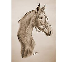 """""""Argentinian Beauty"""" - Criollo mare - Sepia Photographic Print"""