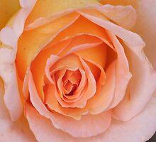 Beauty by Roachelle Playle