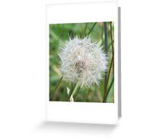 Make A Wish Greeting Card