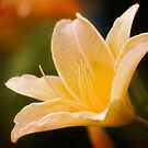 Yellow Lily by VLFatum