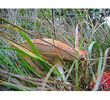 Hide and Seek Mushroom Photographic Print
