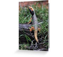 Inland Bearded Dragon (Pogona vitticeps) Greeting Card