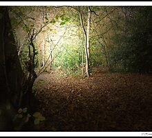 Autumn Walk 2nd Edition - near Slaugham, Sussex by ©FoxfireGallery / FloorOne Photography