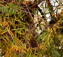 Great Horned Owl by flyfish70