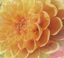 Pastel Dahlia by Sarah Cowan