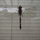 dragonfly by geikomaiko