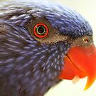 Lorikeet by Steve Bullock