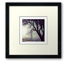 Santa Fe Tree Framed Print