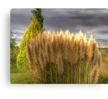Nature Test HDR Shot Canvas Print