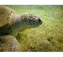 Portrait of a Turtle Photographic Print