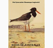 Pied Oystercatcher - Birds of Australia series T-Shirt