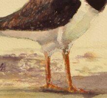 Pied Oystercatcher - Birds of Australia series Sticker