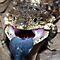 Reptilian Close-up