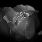 BLACK and white rose by Crispin  Gardner IPA