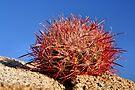 Red Barrel on the Rocks by Jo Nijenhuis